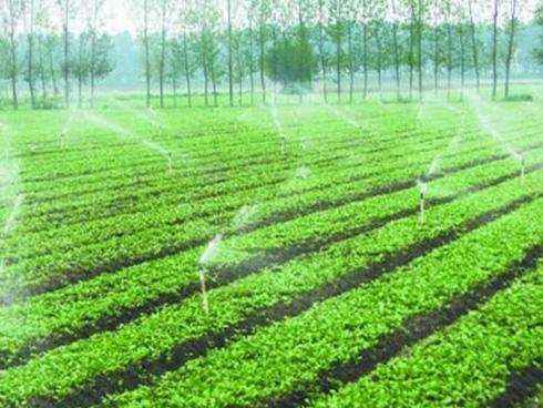 蔬菜种植基地一一监利县杰瑞蔬菜专业合作社
